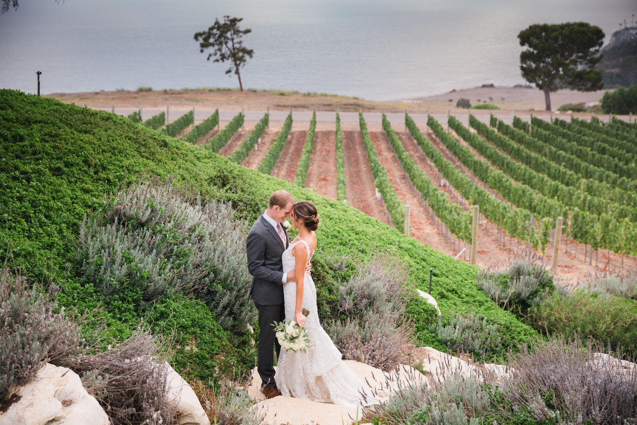Catalina Wine Views