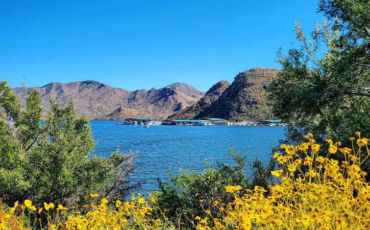 A blue lake near mountains can be seen in the distance between yellow desert wildflowers and green mesquite trees.