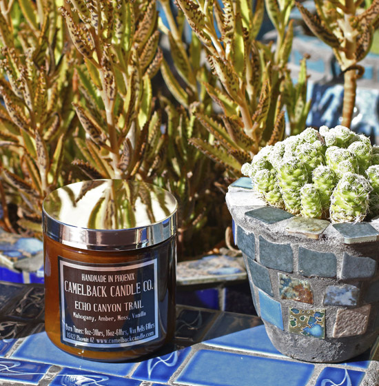 A candle jar sits next to a potted cactus atop a blue tiled wall