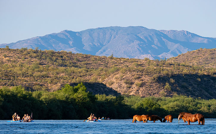 Kayakers drift on the water of a river next to several wild horses taking a drink, desert hills and mountains behind them.