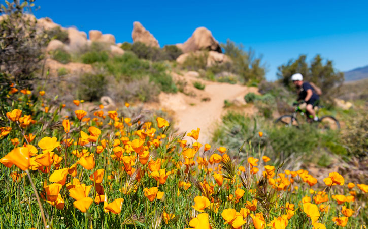 Yellow wildflowers line a desert trail. In the background a mountain biker rides by.