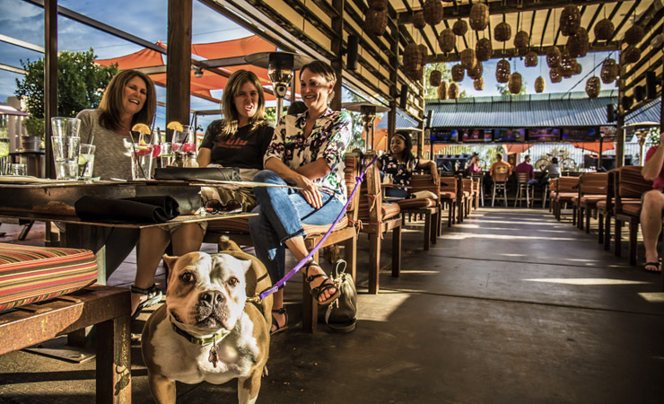 Three women sit at a table, one holding the leash of a dog that is facing the camera.