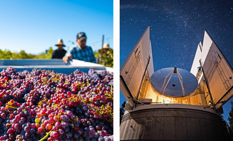 Two images - red grapes are harvested during the day and a large telescope under the stars