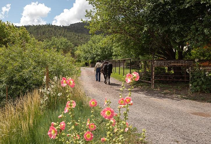 A woman walks away leading a horse down a trail at X Diamond Ranch.