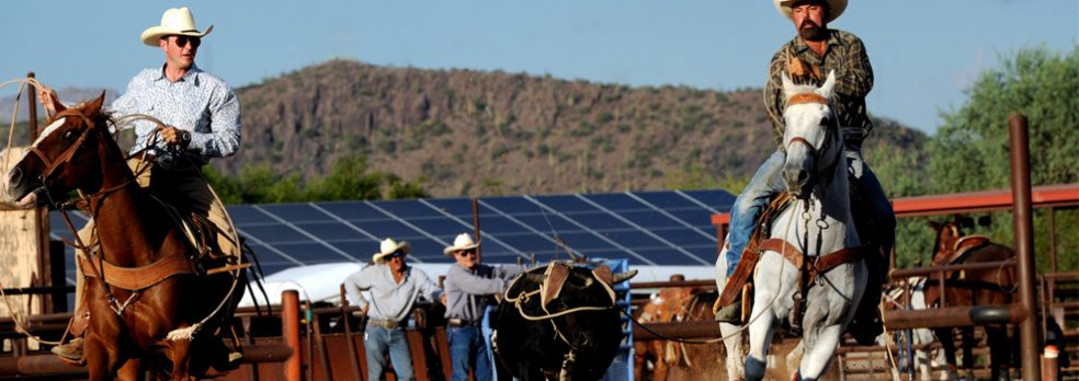 Two cowboys pen a calf at White Stallion Ranch in Tucson, Arizona