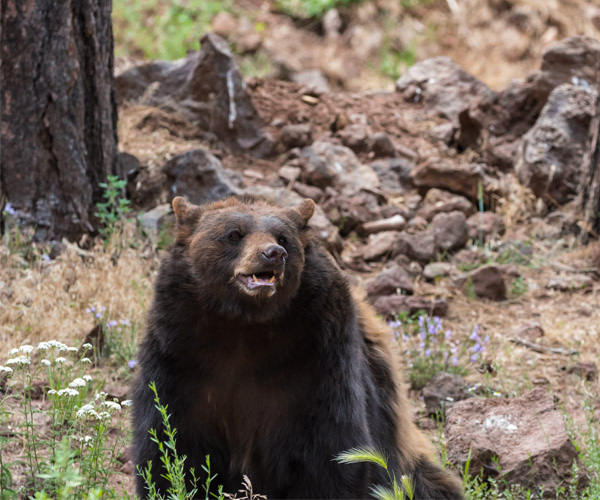 A bear in a forest setting