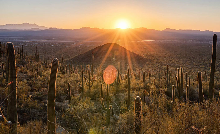 The sun sets on a mountainside covered in saguaro cacti