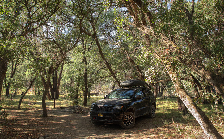 A dark SUV sits parked under a forest of trees during the day