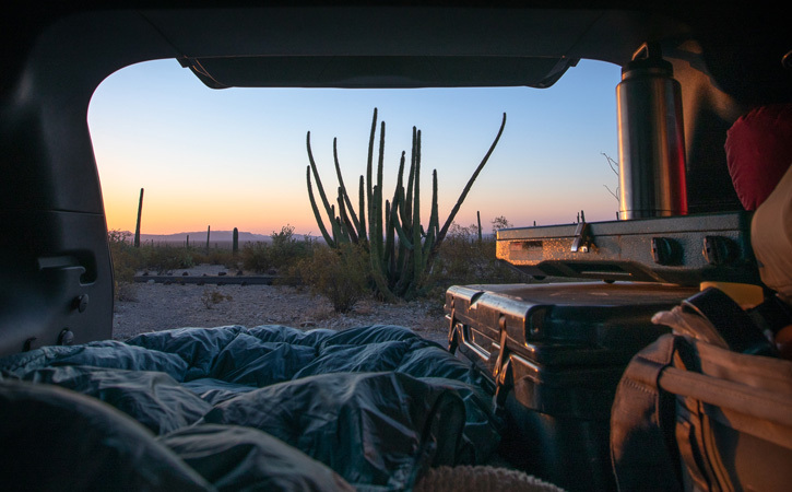 Looking out from the back of a car onto a desert scene centered on an organ pipe cactus