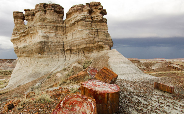 Sandy rock formations sit behind reddish stumps of petrified wood under a cloudy sky