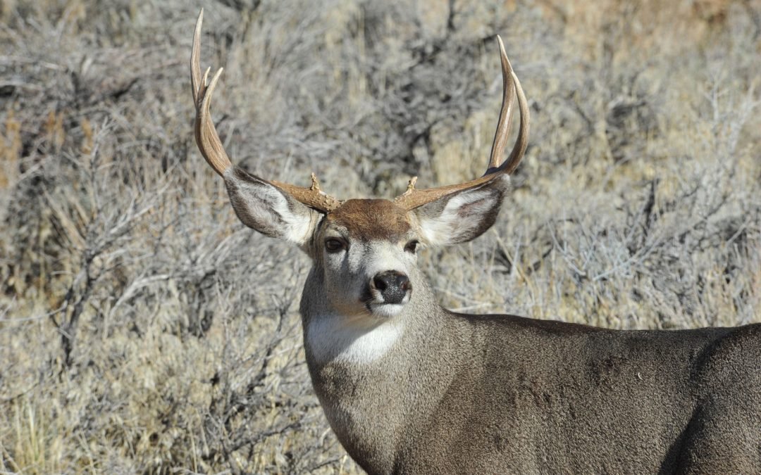 Finding Winter Wildlife in Bishop's Backyard
