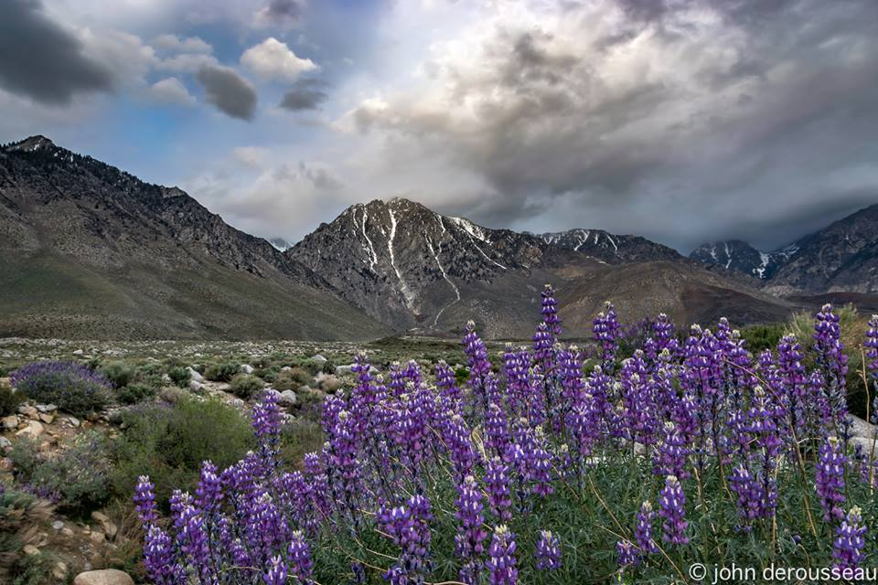 6 Super Spots to See Wildflowers near Bishop