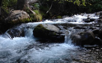 Field Guide to Aquatic Stream Insects of the Sierra Nevada