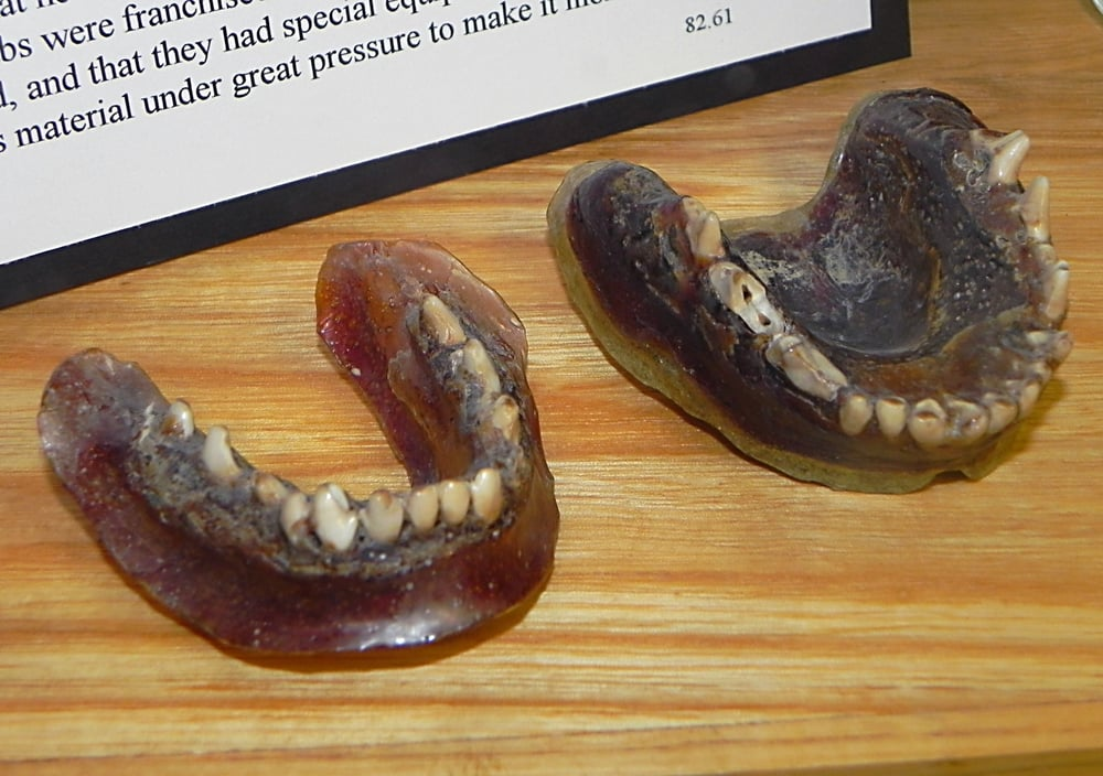 dentures made from celluloid and coyote teeth