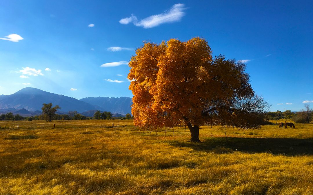 Fabulous Fall Fun in the Eastern Sierra