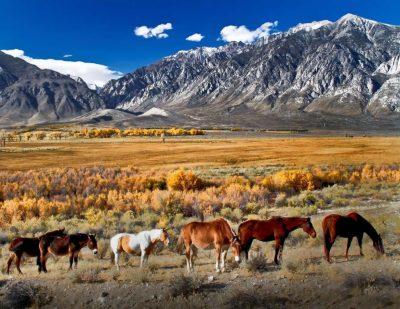 image of mules in pasture