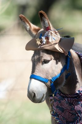 image of a burro with hat on its head.