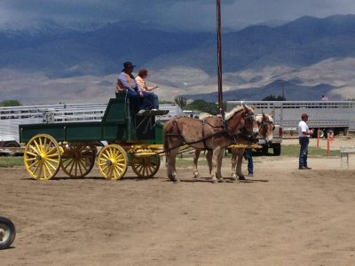 image of two mules hitched up to a wagon.
