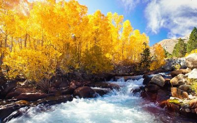 The Magic and Mystery of Fall