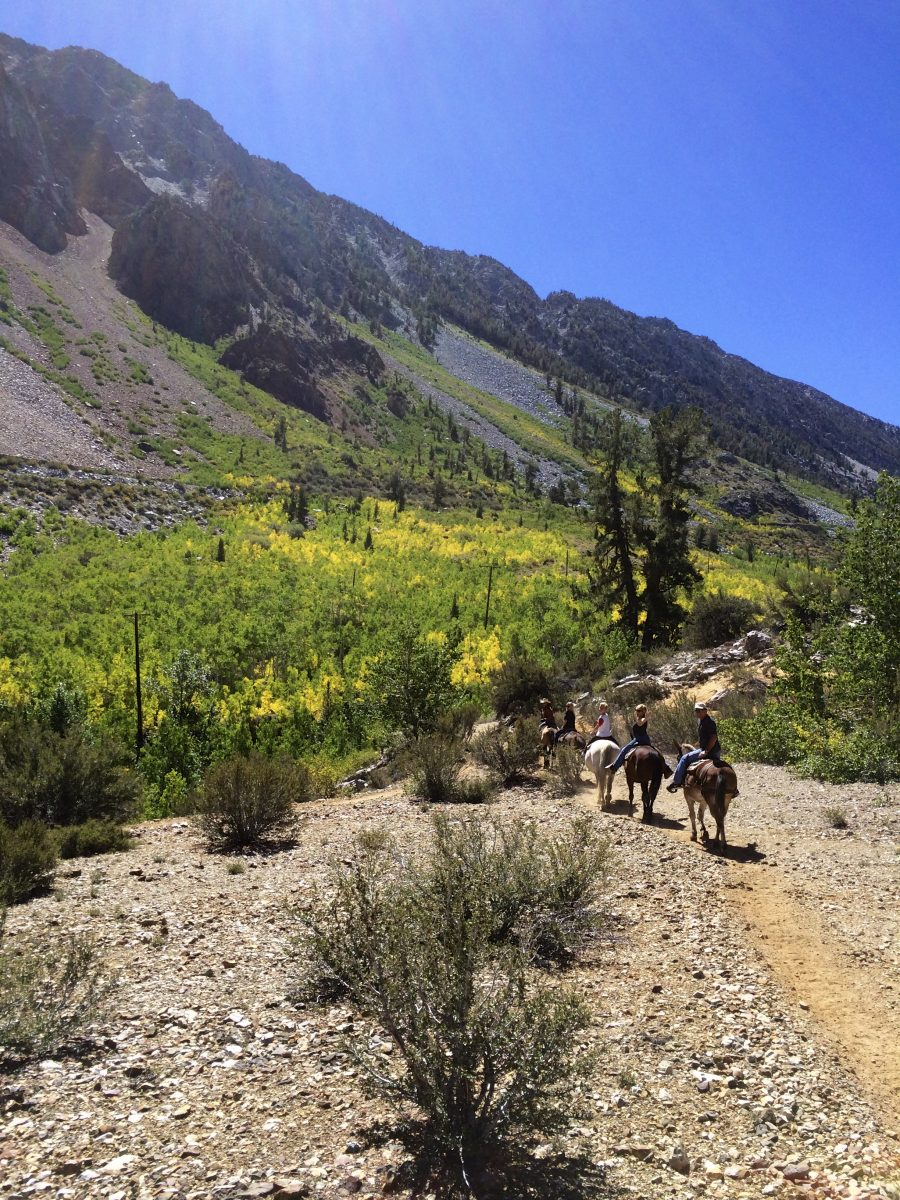 image of horseback riders riding down a trail in the fall