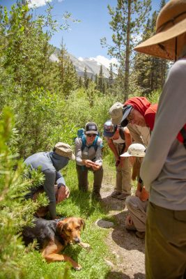 Ranger and hikers on a wilderness trail. Bishop. CA