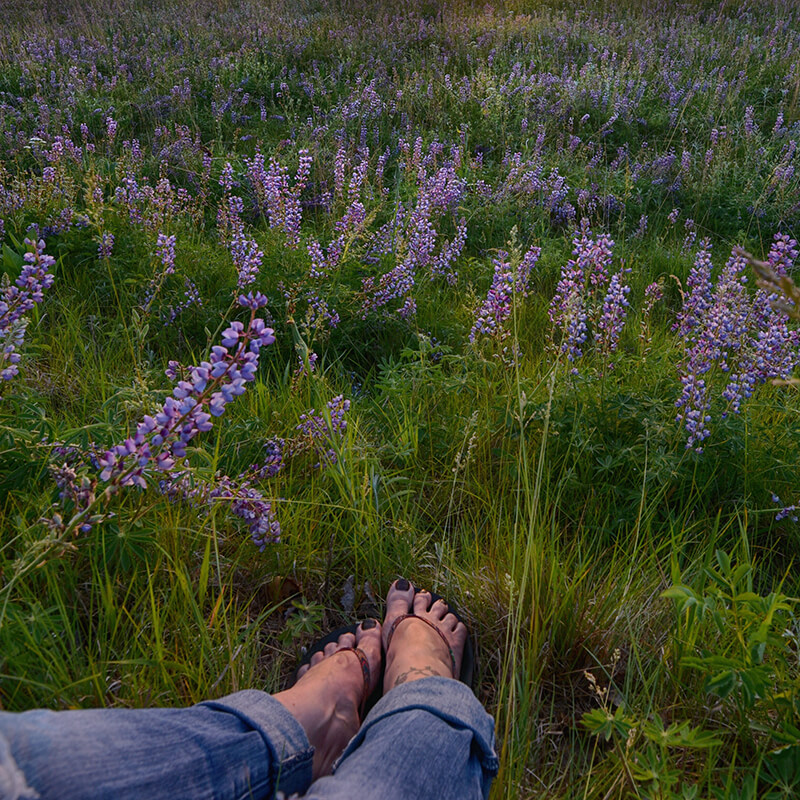 Close up of woman's feet wearing sandals in field of lupins