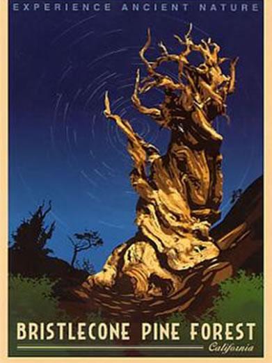 Retro Poster Bristlecone Pine Forest