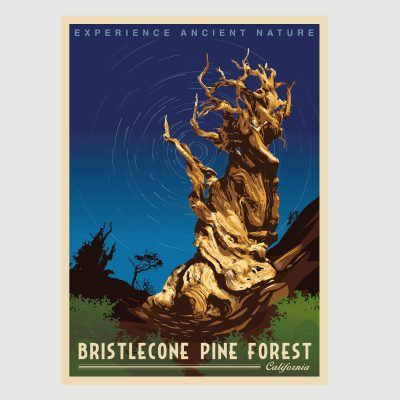 Ancient Bristlecone Pine Forest Retro Poster