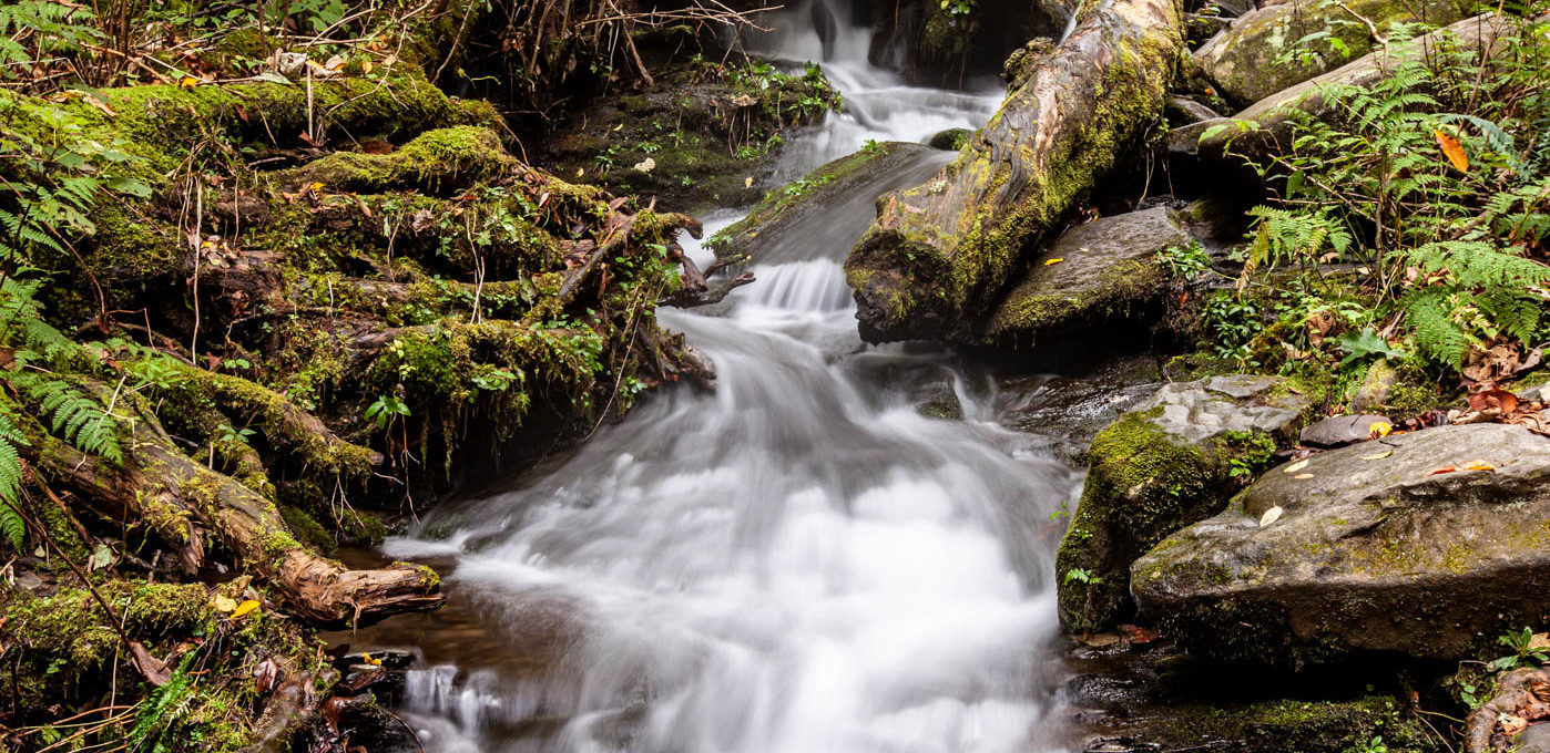 Driving the Roaring Fork Motor Nature Trail in the Great Smoky Mountains
