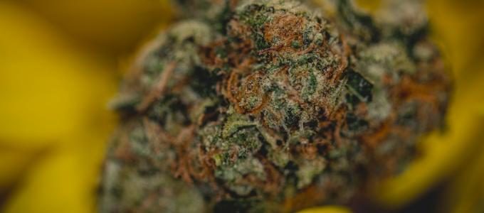 higher % THC