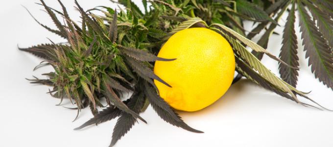 do terpenes get you high