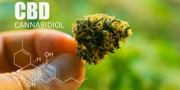 CBD compared to strongest indica strain
