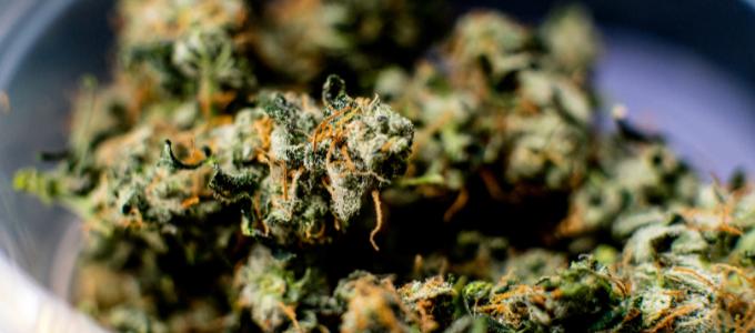 top strains in colorado
