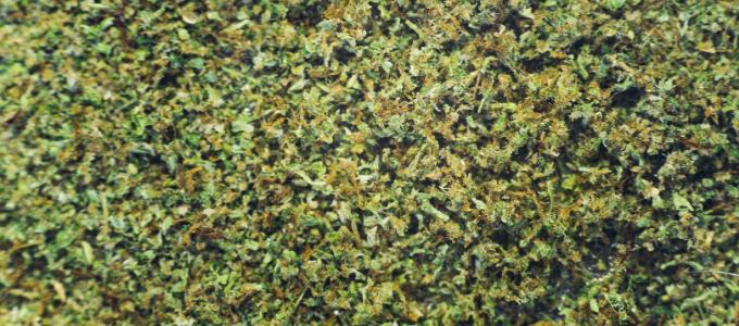 canna caviar weed