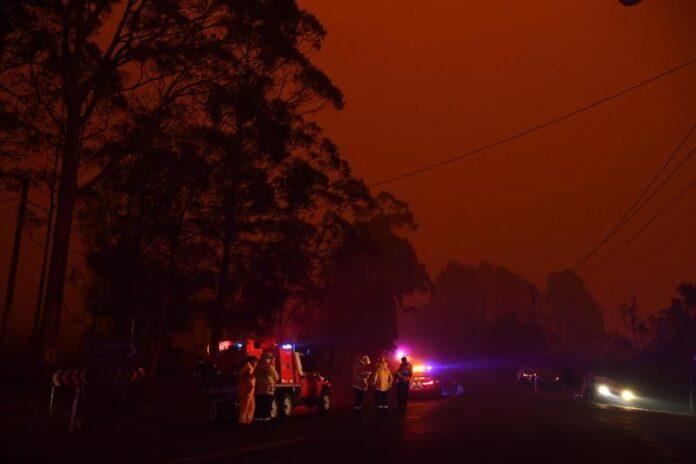 Al menos 480 millones de animales han muerto por incendios en Australia, estima la Universidad deSídney