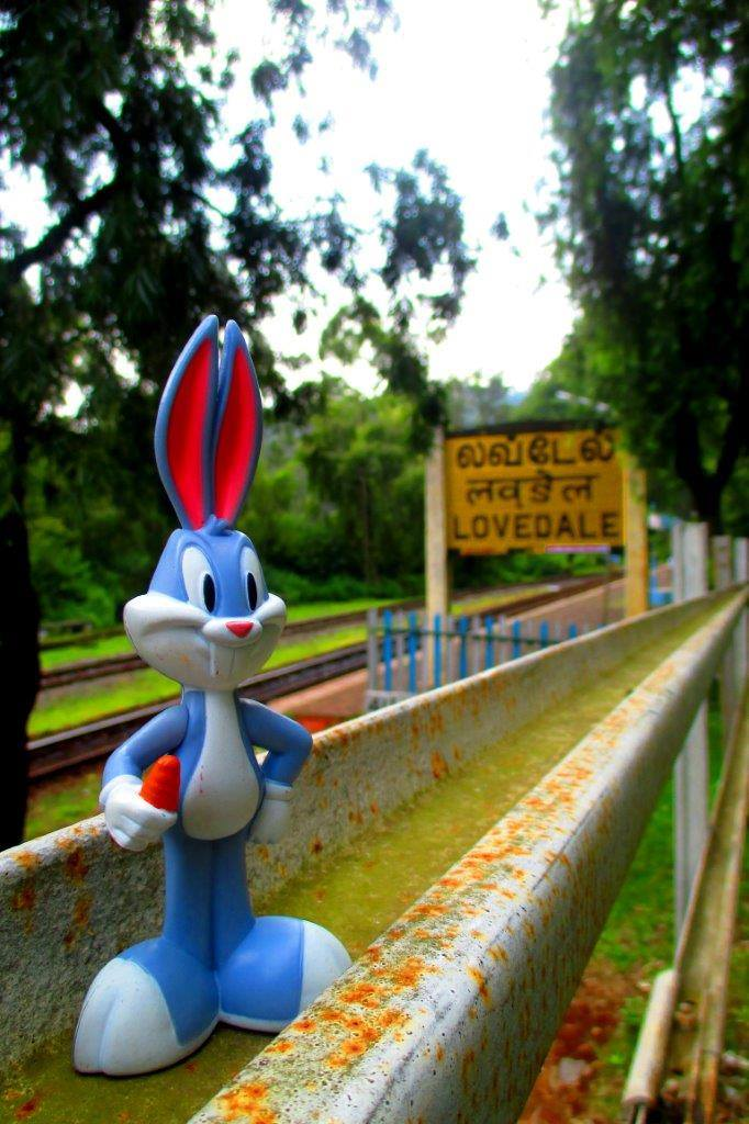Bugs bunny at Lovedale station