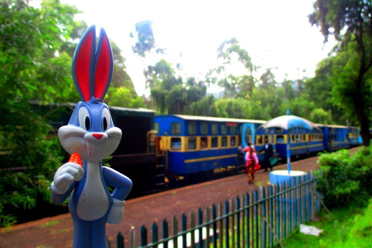 Bugs sees the Nilgiri Mountain Railway