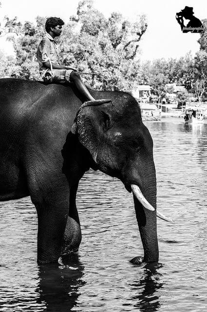 Dubare Elephant Camp Source: Rishab Mathur/Flickr