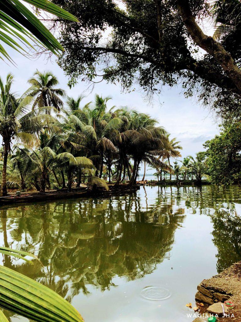 Coconut trees in the backwaters of kumarakom