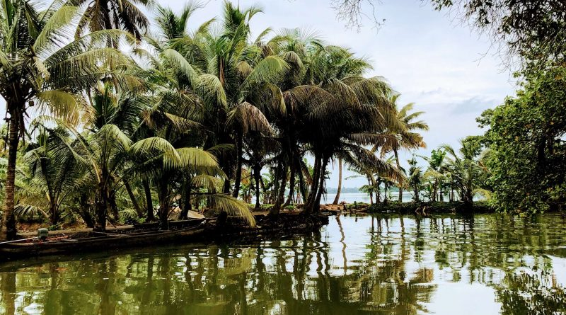 Coconut trees in the backwaters of kumarakom