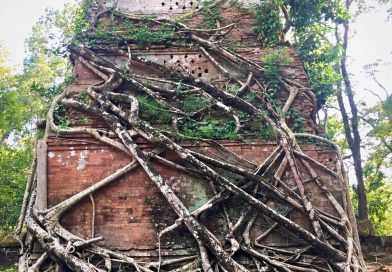 Overgrown roots at Roulos group of temples