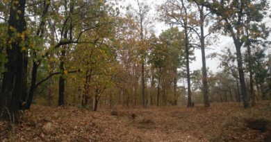 Nearby places in Pench-FI