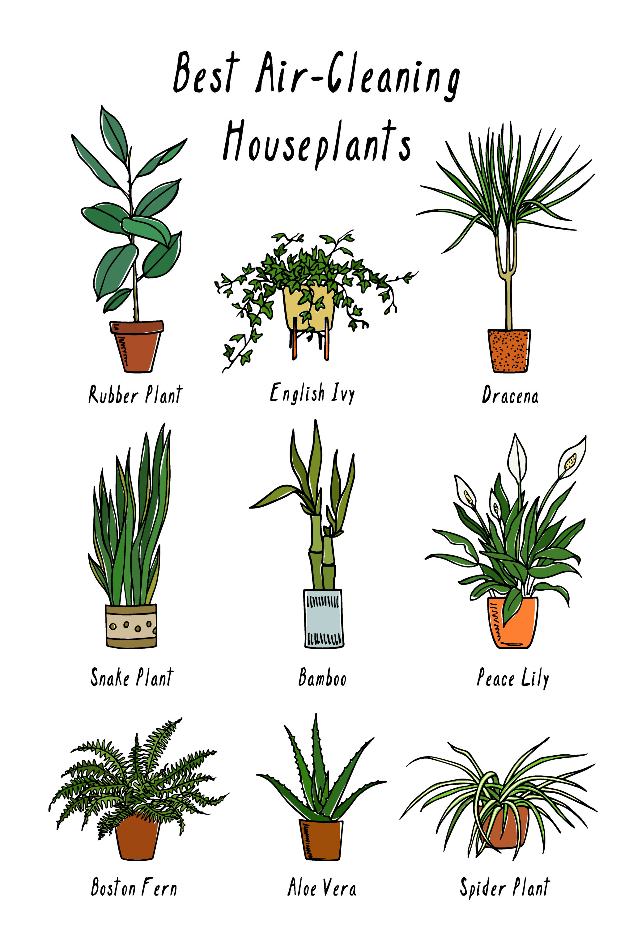 Can plants clean your indoor air? Not really.
