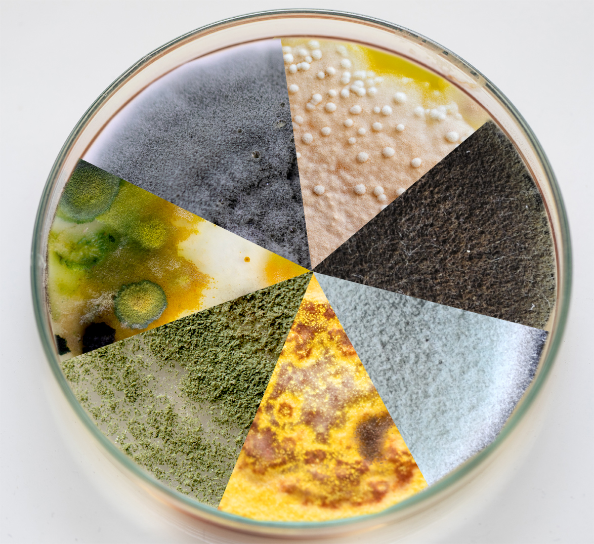 Ask An Expert: Mold Color
