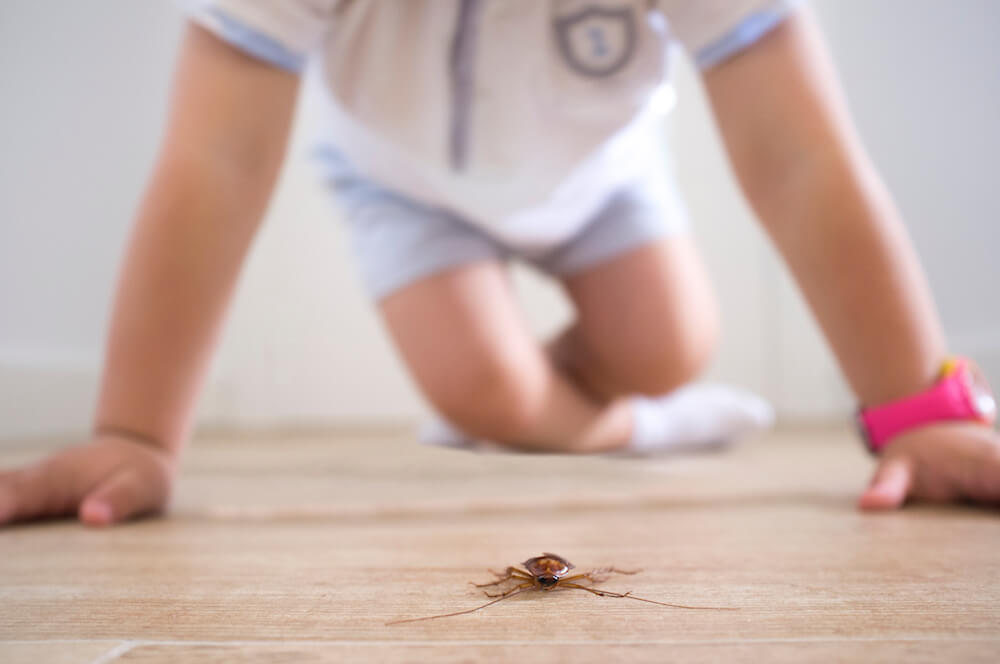 Managing Asthma Through Integrated Pest Management