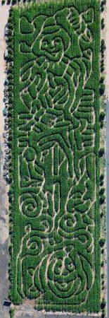 Corn Maze at Vertuccio