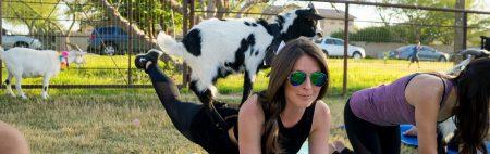 Goat Yoga_1096x345