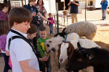 Superstition Farm - Petting Goats
