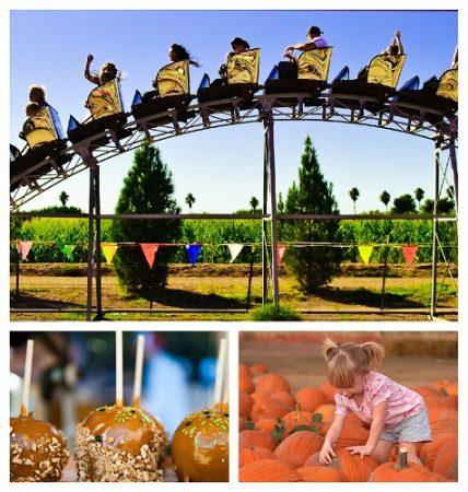 Schnepf Farm Pumpkin and Chili Party