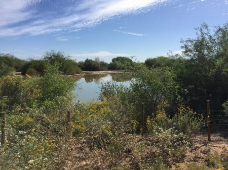 gilbert riparian preserve